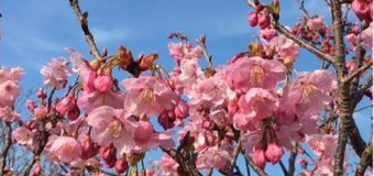 初春の令月にして、気淑く風和ぐ。梅は鏡前の粉を披く、蘭は珮後の香を薫す。